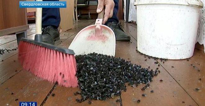 Εκατοντάδες εκατομμύρια μύγες σε χωριό της Ρωσίας (vid) — ΣΚΑΪ (www.skai.gr)